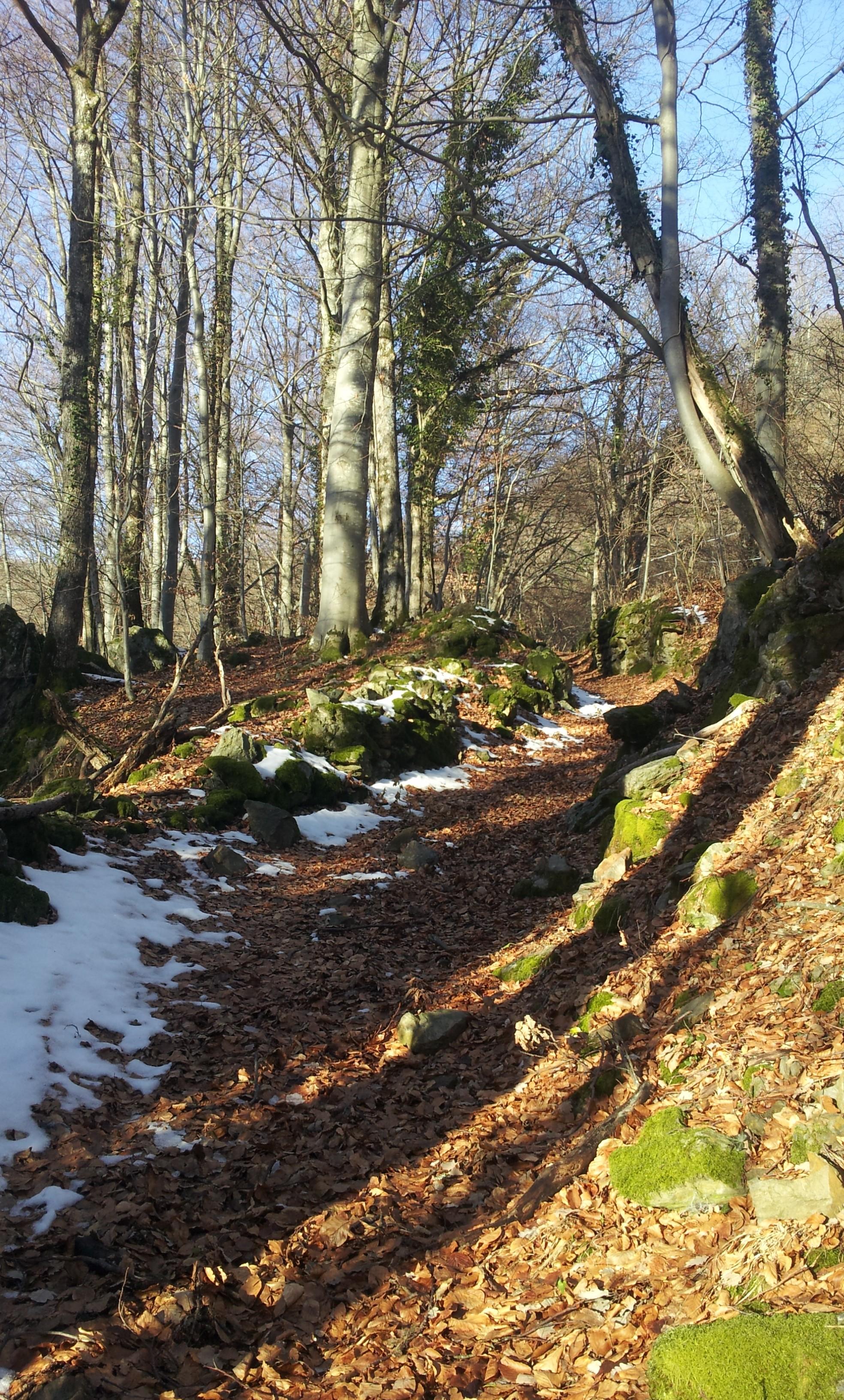 sechilienne mont sec col madeleine 24 janv 16 cap (87)